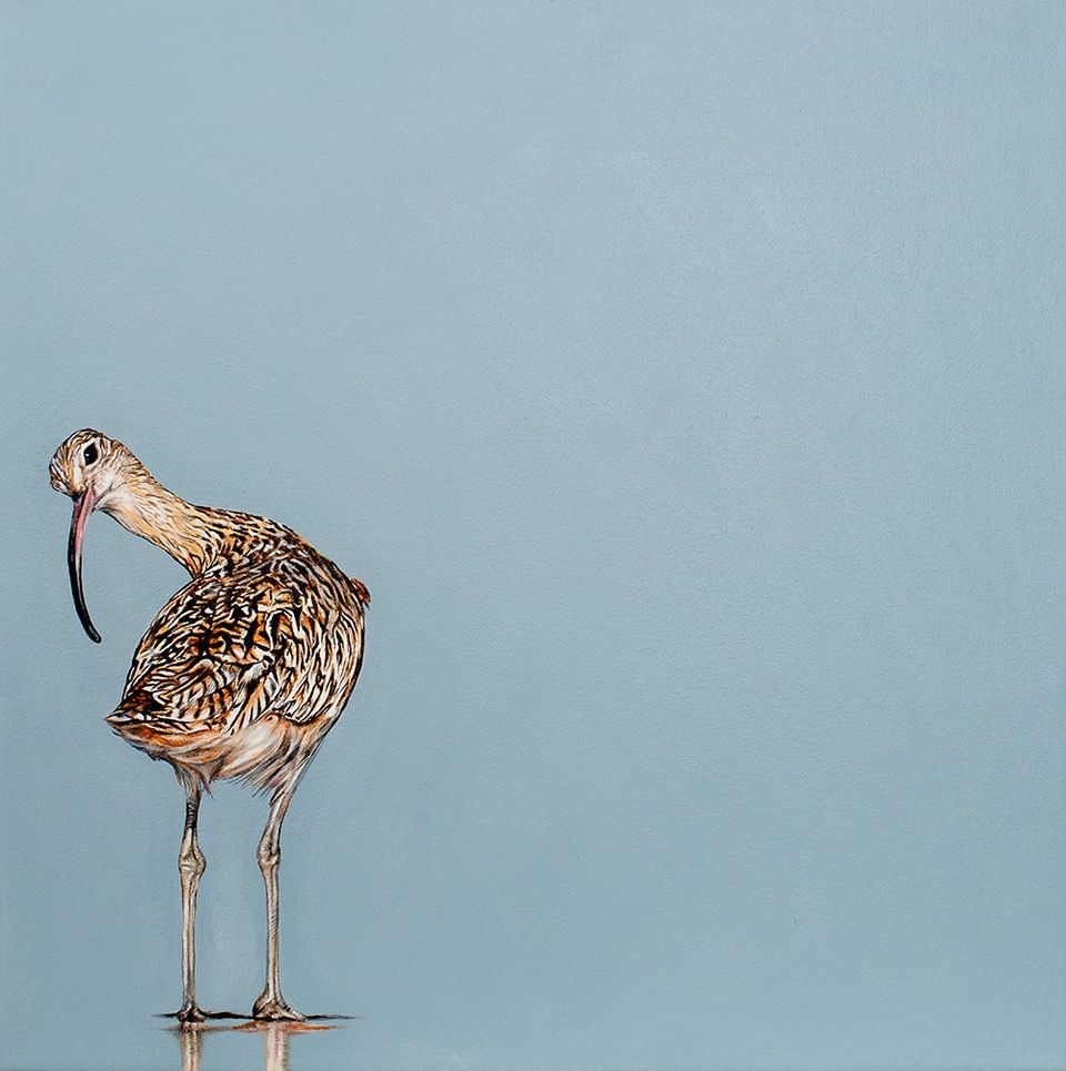 Curlew by Natalie Toplass