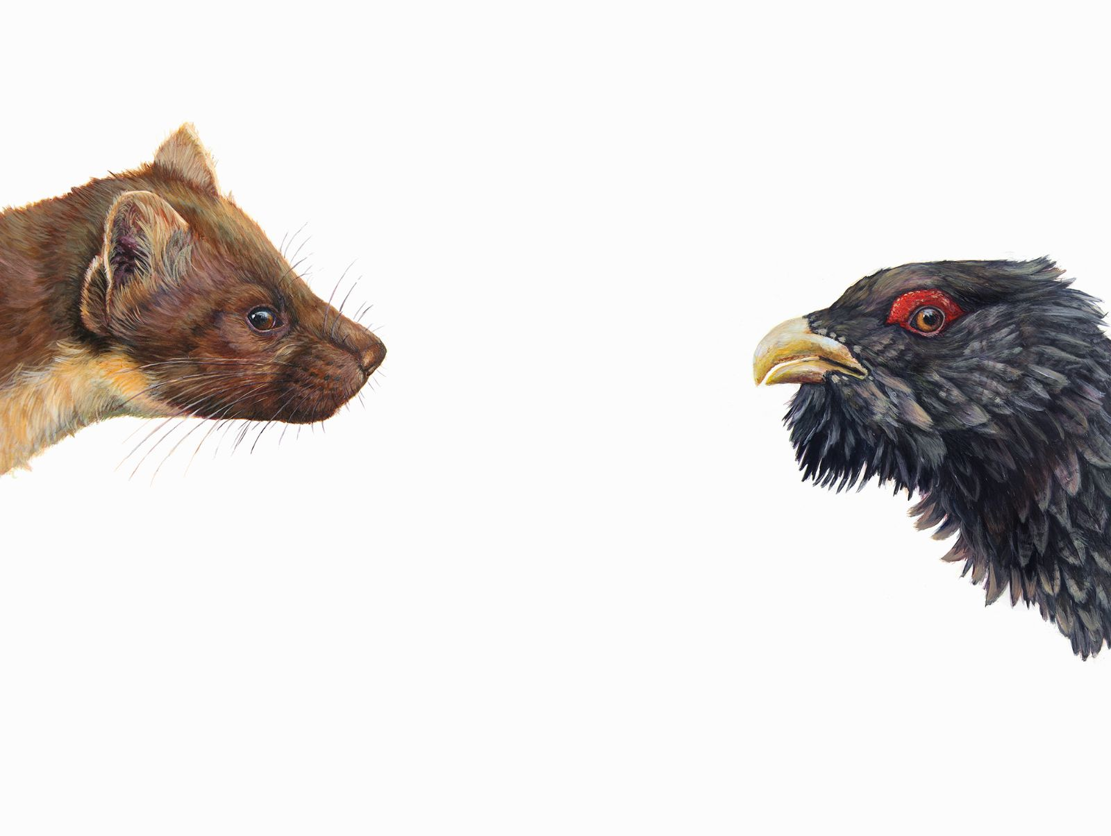 Top Predator: Marten and Capercaillie by Hazel Mountford