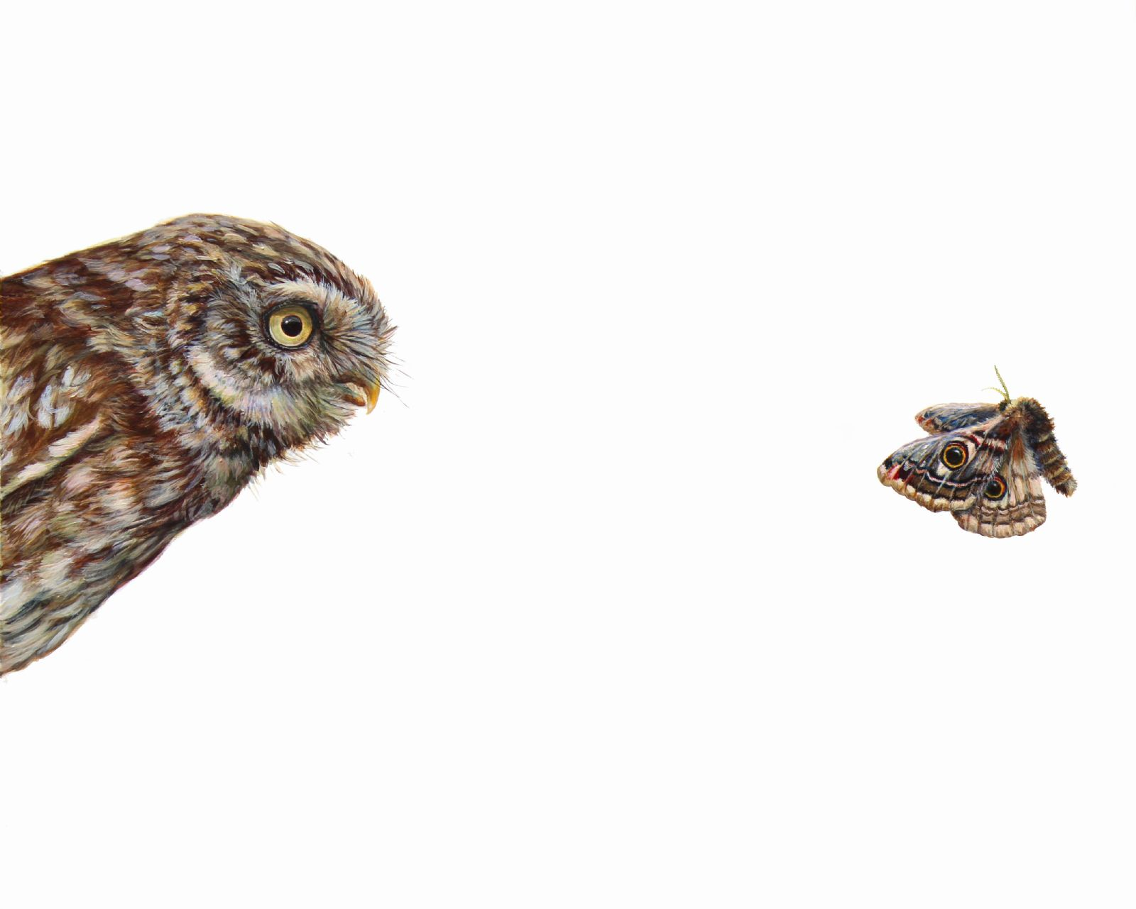 Top Predator : Owl & Moth by Hazel Mountford