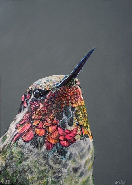 Painted Lady by Natalie Toplass