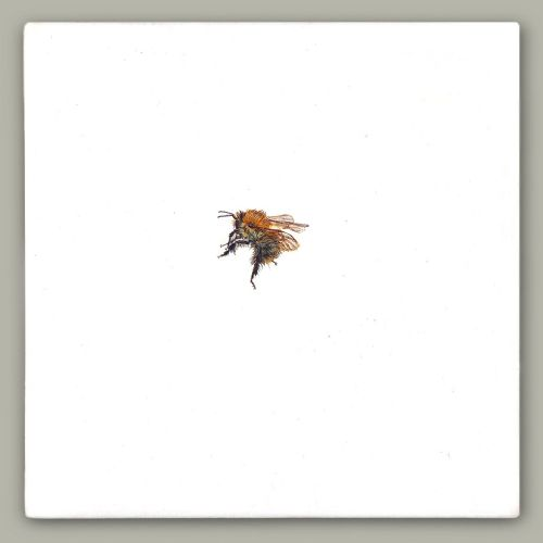 One Bee Left - Common Carder Bee