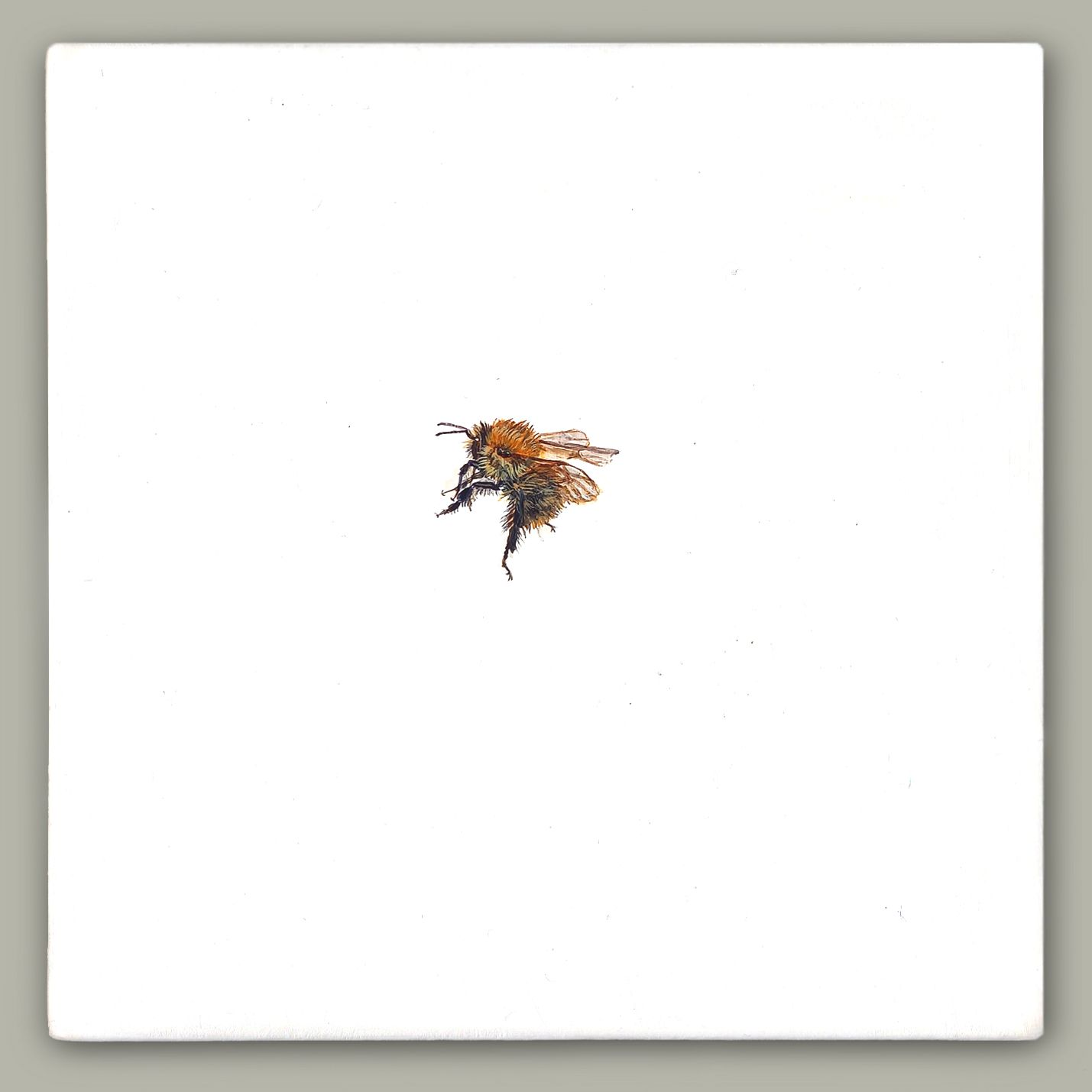 One Bee Left - Common Carder Bee by Hazel Mountford